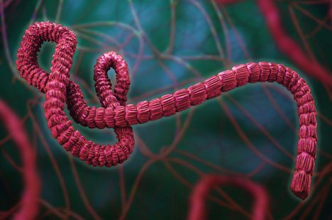 computer rendering of the Ebola virus